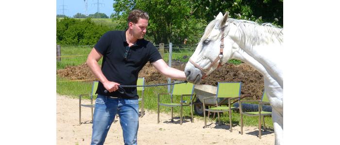 Klarheit in der Führung, Körpersprache, verständliche Kommunikation, Mensch will Pferd führen