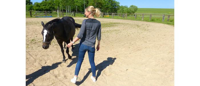 Führungskraft und Pferd, Führen ohne Weisungsbefugnis, Ziele, Überzeugungen, Klarheit