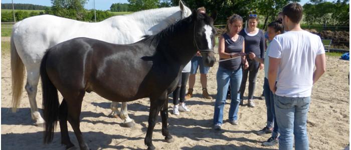 Pferdecoaching, Persönlichkeitsentwicklung für Führungskräfte, erfolgreich Führen, emotionale Führung, Empathie, Team trifft Entscheidung