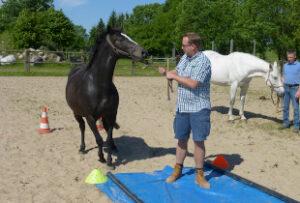 Führungskräfte Training mit Pferd, situative Führung