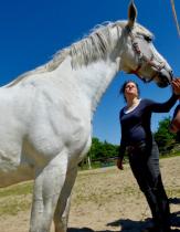 Persönlichkeits-Entwicklung mit Pferden