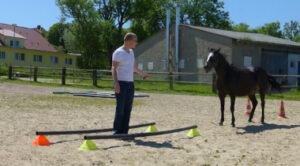 Führungskräfte Training mit Pferden