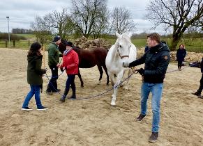 Team Training mit Pferden, Organisation, Absprachen, Ziele, Koordination, Kooperation